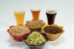 Home brew ingredients of grain, hops, yeast and water. Home brewed beer showing the different color of beer that different grains produce from pale 2 row grain Royalty Free Stock Photo