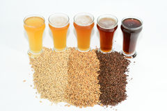 Home brew ingredients of grain, hops, yeast and water. Home brewed beer showing the different color of beer that different grains produce from pale 2 row grain Stock Photo