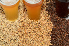 Home brew ingredients of grains and hops. Home brewed beer showing the different color of beer that different grains produce from pale 2 row grain to cara pils Stock Photos