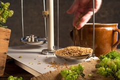 Home Brewing of Beer. Royalty Free Stock Photos