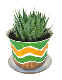 Home cactus Stock Image