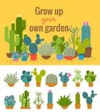Home cactus garden poster Stock Photography