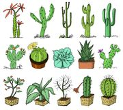 Home cactus plants with prickles and nature elements in pots and with flowers. exotic or tropical. collection of various. Succulents. engraved in ink hand drawn Royalty Free Stock Image