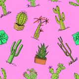 Home cactus plants with prickles and nature elements in pots and flowers. exotic or tropical. various succulents. Seamless pattern. engraved in ink hand drawn Stock Photography