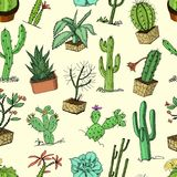Home cactus plants with prickles and nature elements in pots and flowers. exotic or tropical. various succulents. Seamless pattern. engraved in ink hand drawn Stock Photos