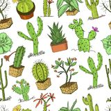 Home cactus plants with prickles and nature elements in pots and flowers. exotic or tropical. various succulents. Seamless pattern. engraved in ink hand drawn Royalty Free Stock Image