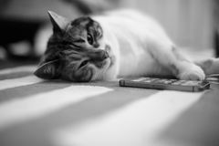 Home carpet with cat sleeping. Beautiful pet cat lying on the carpet next to mobile phone  - home sweet home for this feline is all around the house, black and Royalty Free Stock Image