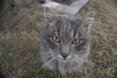Сat. Home cat in the nature Royalty Free Stock Images
