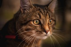 Home cat portrait on blurred background Stock Photos
