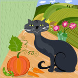 Home cat and pumpkin Royalty Free Stock Photos
