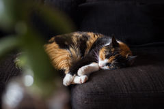Home cat sleeps at the sofa Stock Photo