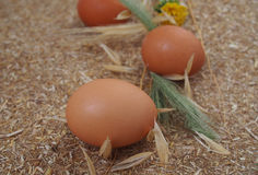 Home cooking – raw chicken eggs Stock Images