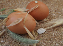 Home cooking – raw chicken eggs Royalty Free Stock Photo