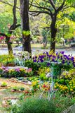 In home cozy garden on summer. Royalty Free Stock Photography