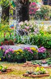 In home cozy garden on summer. Royalty Free Stock Images