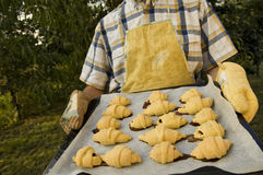 Home croissants baked. Photo of man with baked croissants Royalty Free Stock Photo