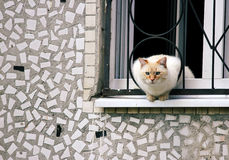 Home curious cat sitting on a ledge, looking out into the street Royalty Free Stock Photo