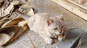 Home cute Cats with sandal outdoor Stock Photos