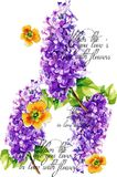 Home decarative beautiful colorful typography design and hand drawn letters for room stock photos
