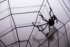 Home decor against wall background.Halloween holiday concept.Halloween background with spider web and spiders as symbols Stock Images
