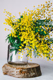 Home decor, Brunch of beautiful mimosa yellow spring flowers in glass on wood Stock Images
