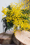 Home decor, Brunch of beautiful mimosa yellow spring flowers in vase on wood Stock Photos