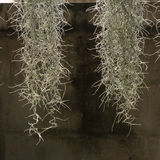Home decorated garden with spanish moss Stock Photography