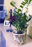 Home decoration. Some green plants in decorative pots, cupboard decoration Royalty Free Stock Photos