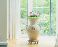 Home decoration with amphora or terracotta vase with flowers on window. Living room interior Stock Images