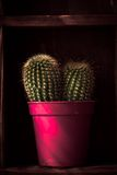 Home decoration, cactus on rustic shelf Stock Image