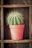Home decoration, cactus on rustic shelf Royalty Free Stock Image