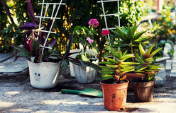 Home decorative potted plant Stock Photography