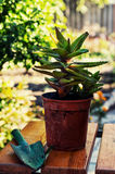 Home decorative potted plant Stock Images