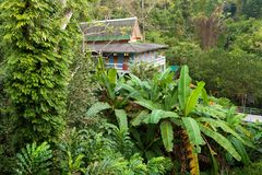 Home in deep jungle stock images