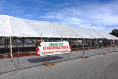 Home Depot manque d'arbres de Noël par semaine avant Noël Photo libre de droits