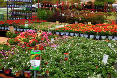 Home Depot Nursery Royalty Free Stock Photos