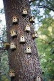 HOME do pássaro foto de stock