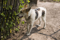 Home dog on the yard. Four-footed friend. Loyalty Stock Images