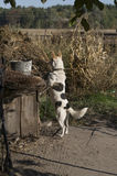 Home dog on the yard. Four-footed friend. Loyalty. Black and white Royalty Free Stock Photo