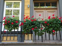 Home door, window and flowers. Red beautiful flowers near home window and doors, Lithuania royalty free stock images