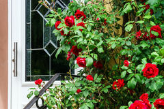 Home entrance decorated by natural roses Royalty Free Stock Photos