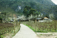 Home of ethnic minorities. Ha Giang is one of the six poorest provinces of Vietnam. Ha Giang is a famous tourist destination in Vietnam Stock Photography