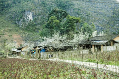Home of ethnic minorities. Ha Giang is one of the six poorest provinces of Vietnam. Ha Giang is a famous tourist destination in Vietnam Royalty Free Stock Photography