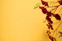 Home flower over yellow background. Backdrop with copy space Royalty Free Stock Images