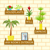 Home flowers for interior Royalty Free Stock Images