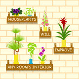 Home flowers in pots. For interior. Vector illustration eps 10 royalty free illustration