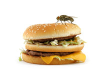 Home fly sitting on appetizing hamburger Royalty Free Stock Photos