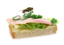 Home fly sitting on delicious ham sandwich Royalty Free Stock Images