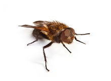 Home fly on white Royalty Free Stock Images