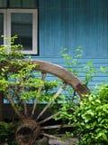 Home garden. Shrubbery of the home garden Stock Images